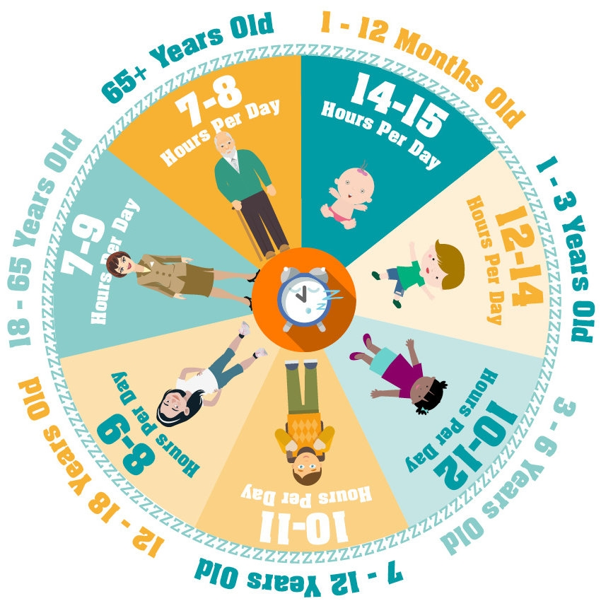 How much more sleep do you need a night? The graphic shows you how much sleep each age group needs on average.